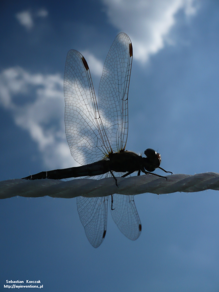 Dragonfly (2010)
